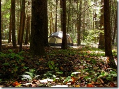 desoto_national_forest_camping